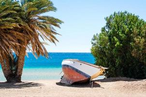 gammal yacht i sanden mellan växter