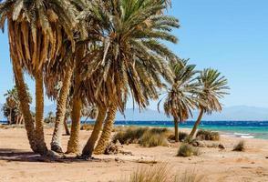 Röda havet stranden