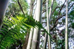 grönt ormbunkeblad i en skog foto