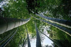 tittar upp på träd