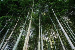 tittar upp på bambu foto