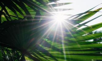 solstrålar genom palmblad foto