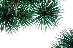 isolerade tropiska växter foto