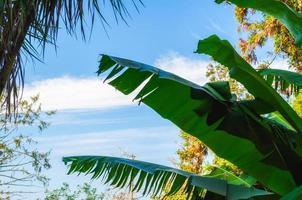 tropiska palmblad mot himlen och molnen