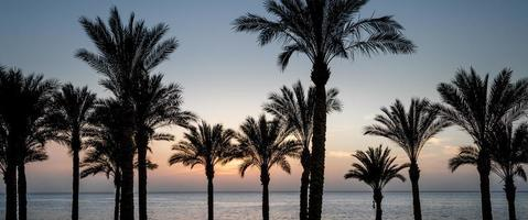 solnedgång och palmer