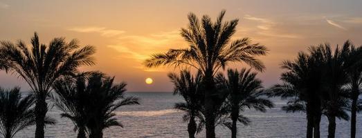 solnedgång på en tropisk strand med palmer