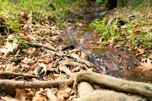 en bäck som löper genom trädens nakna rötter i en stenig klippa och fallna höstlöv foto