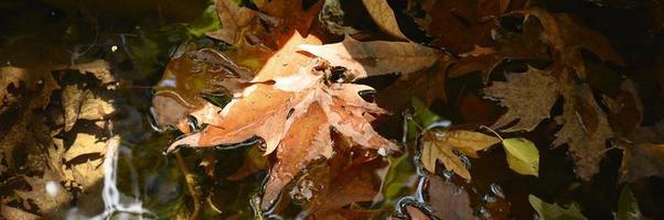 våta fallna höstlönnlöv i vattnet foto