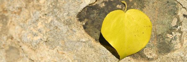 gult fallet höstblad i form av ett hjärta på en sten foto