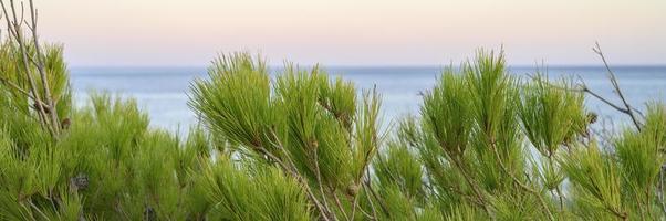 havslandskapets horisont i skymningen och suddiga grenar av ett tall foto
