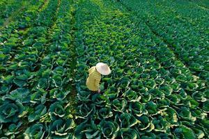 kvinnlig bonde med stråhatt är trädgårdsarbete foto