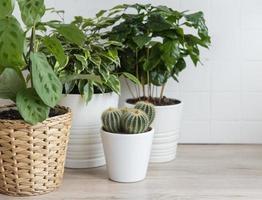 gröna krukväxter på ett bord i ett hus foto