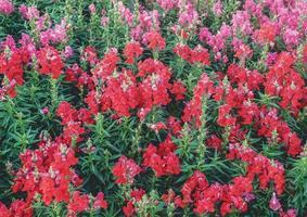 blomsterträdgård i naturen foto