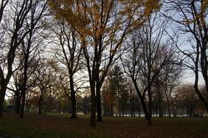 höstfärger i en park foto