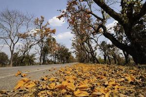 höstens väglandskap foto
