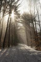 vinter solljus genom träden i en skog foto