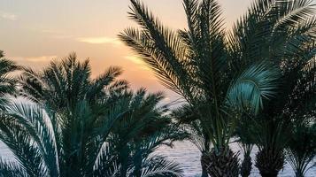 palm grenar mot gryningen himmel foto