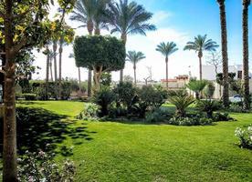 trädgård med palmer foto