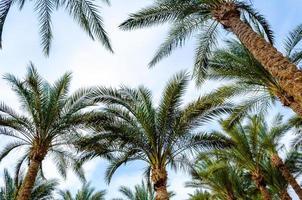 palmer och himmel foto