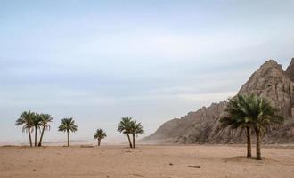 gröna palmer med berg foto