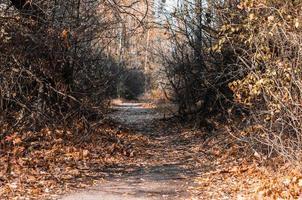 gångväg i ett höstlandskap foto