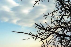 grenar mot en blå himmel med moln foto