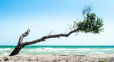 krökt träd på en strand foto