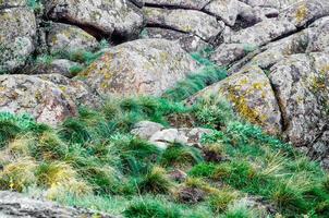 grönt gräs på stenstenar foto