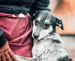 hund som omfamnar ägaren foto