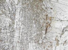 närbild av trädbark för bakgrund eller konsistens foto