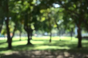 naturliga stadsparkens bokeh foto