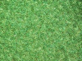 grönt gräs i ett fält foto