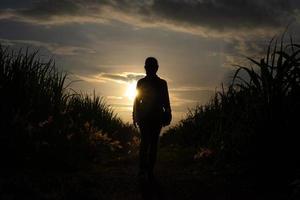 bondens silhuett som står i sockerrörsgrödan foto