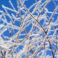 mot vinterblå himmel, grenar i rimfrostens skarpa nålar foto