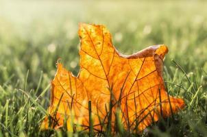 brunt blad i solljus foto