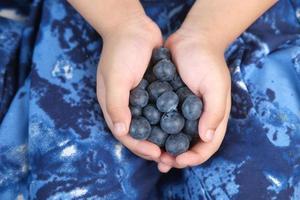 barn som håller färska blåbär