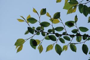 gröna träd lämnar under vårsäsongen foto