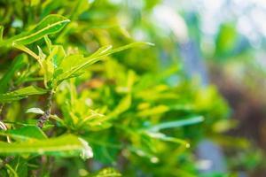 närbild av gröna blad i ett växthus foto