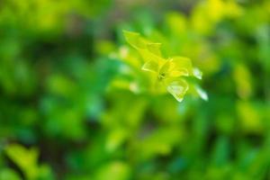 frodig grön buske foto