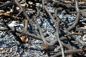 närbild bränd ved med aska på marken från eld foto