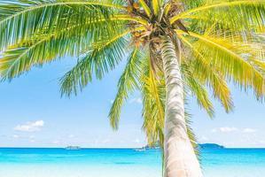 vacker kokosnötpalm foto