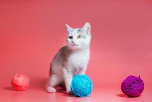 grå och vit katt med garn foto