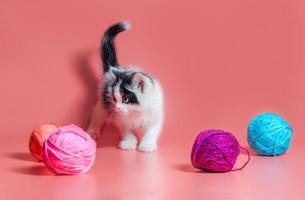 svartvit katt med garn