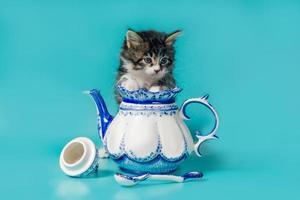 kattunge i en tekanna foto
