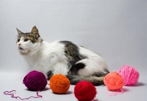 porträtt av en katt med garn