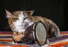 grinig katt med en trumma