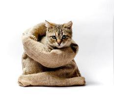 brun katt i en påse