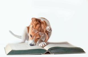 hund med läsglasögon och en bok