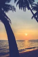 silhuett av palmer