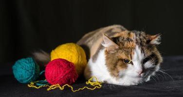 irriterad katt med garn foto